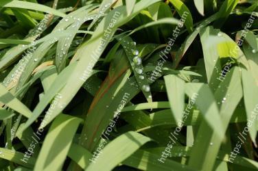 Leaf, Plant, Flower, Grass, Terrestrial plant, Grass family, Water, Plant stem, Flowering plant, Moisture