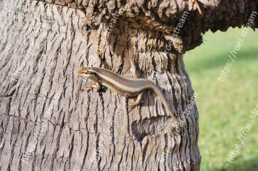 Reptile, Trunk, Tree, Lizard, Scaled reptile, Skink, Plant, Anole, Adaptation, Wood