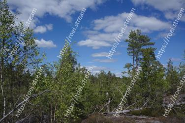 Tree, Nature, Vegetation, Natural environment, Sky, Natural landscape, Tropical and subtropical coniferous forests, Nature reserve, Wilderness, Biome