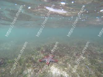 Underwater, Water, Organism, Starfish, Sea, Marine biology, Echinoderm