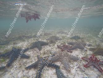 Starfish, Echinoderm, Marine invertebrates, Water, Underwater, Marine biology, Organism, Sea, Reef, Invertebrate