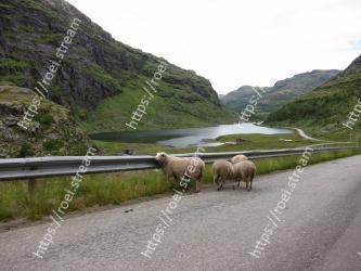 Highland, Sheep, Sheep, Road, Mountainous landforms, Mountain pass, Mountain range, Pasture, Mountain, Herd