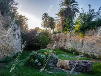 Tree, Wall, Grass, Grass family, Botany, Garden, Stone wall, Plant, Palm tree, Landscape